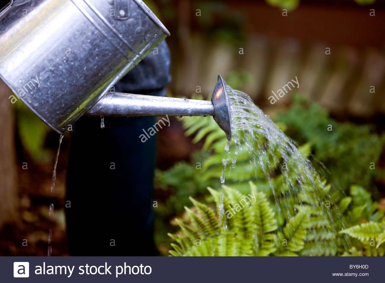 A man watering his garden - Stock Image