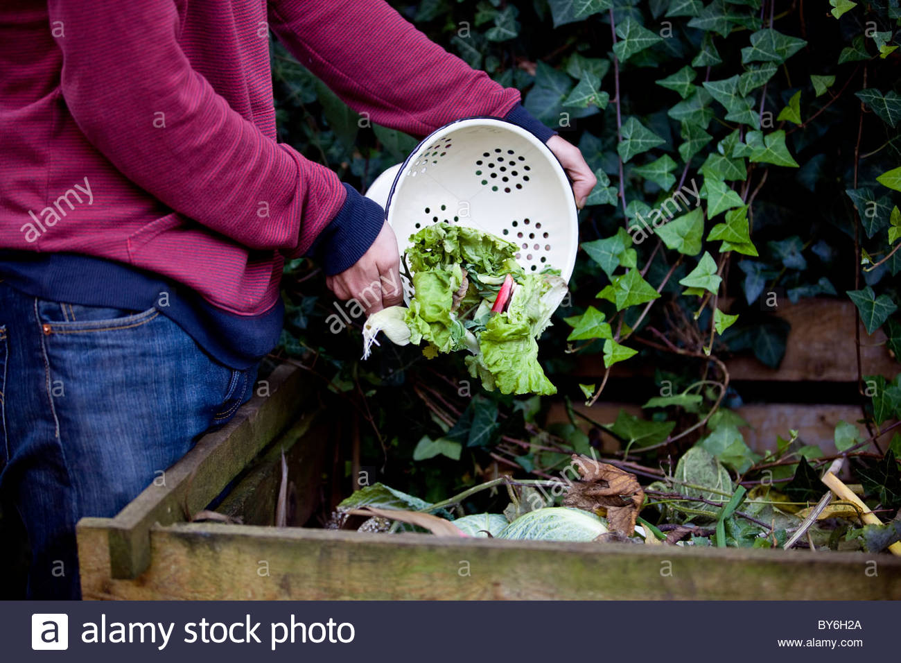 A man emptying vegetable peelings onto a compost heap - Stock Image