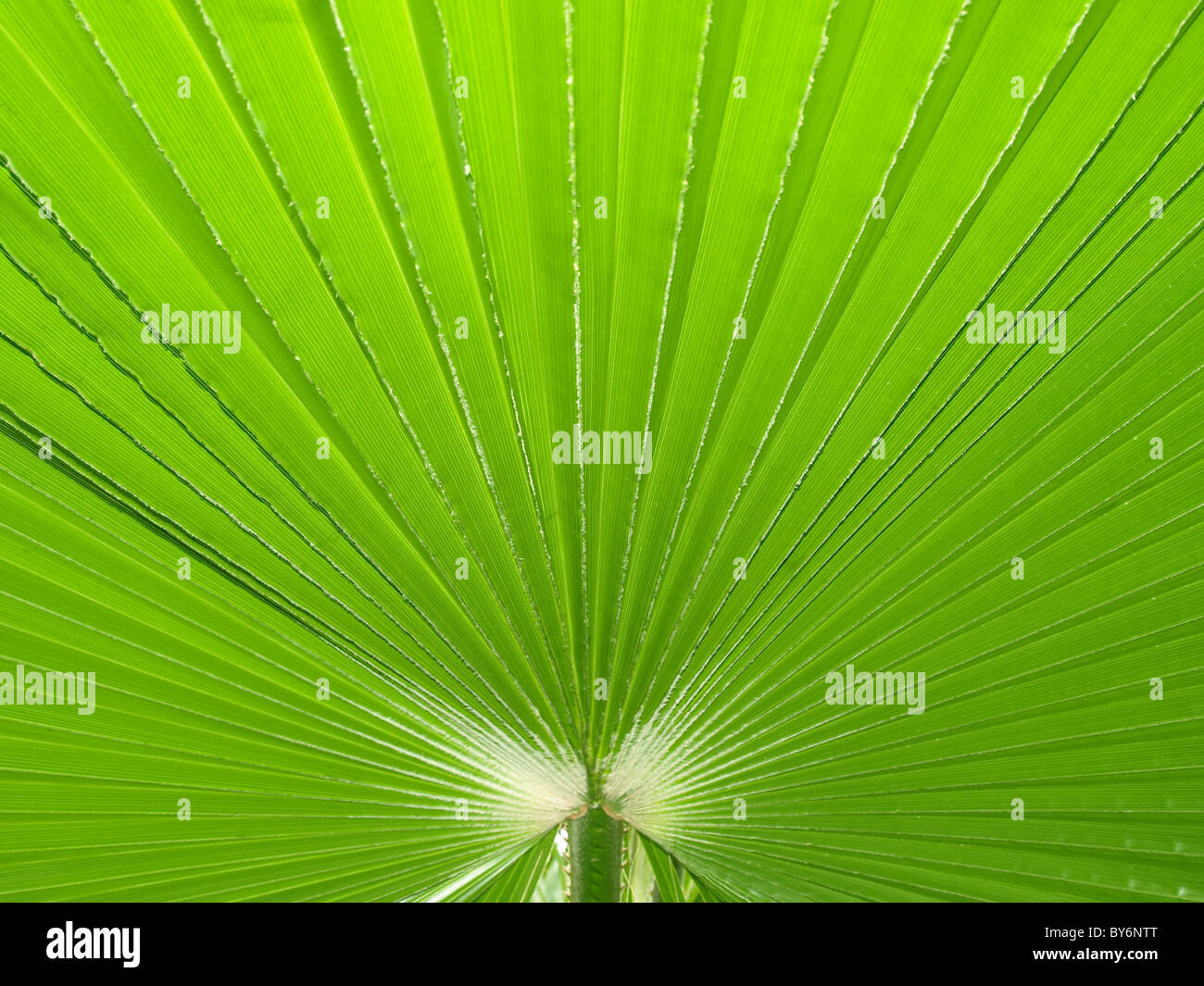 green sheet background - Stock Image