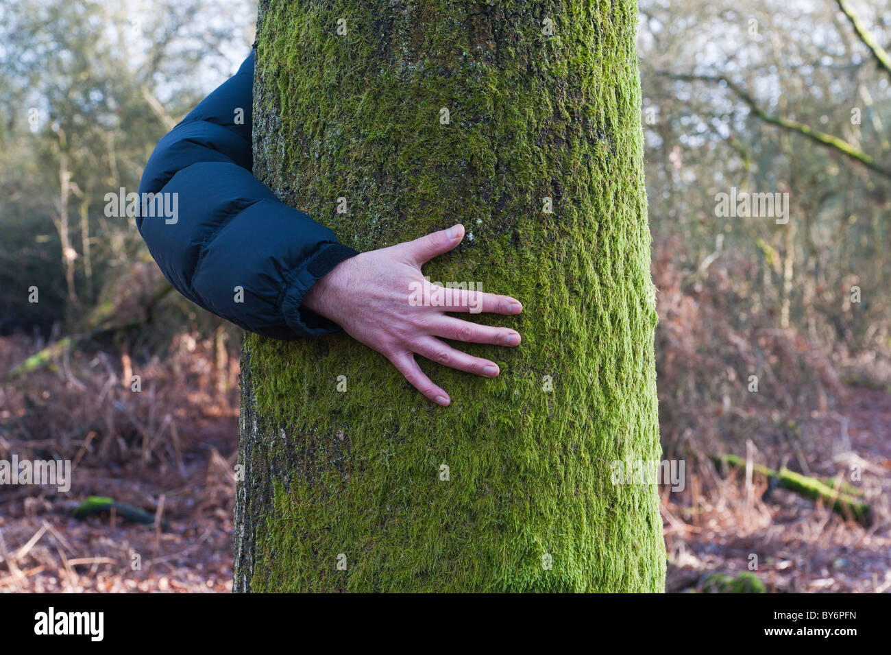 Man hidden behind a tree in a wood with one arm visible - Stock Image
