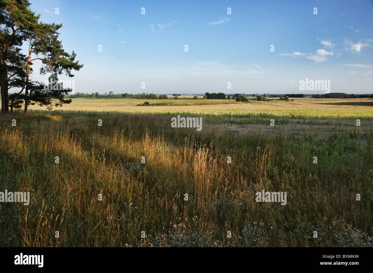 Meadow near Beelitz, Nuthe - Nieplitz Nature Park, Land Brandenburg, Germany Stock Photo