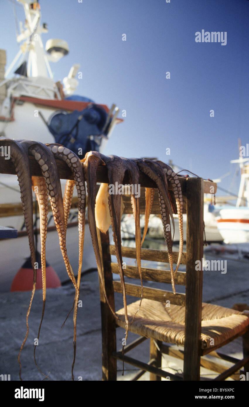 Calamari drying in the sun, sun-dried calamari, Naussa, Paros, Mediterranean sea, Greece, Europe - Stock Image