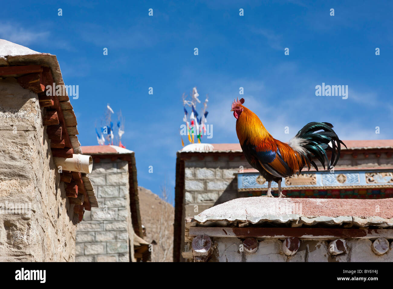 Traditional flags and cockerel on the roof of house in Tibetan village on road from Lhasa Airport to Lhasa Tibet - Stock Image