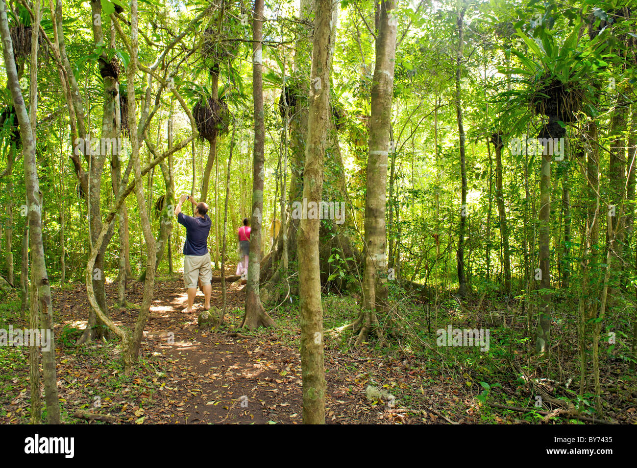 Tourist photographing Palissander and Eucalyptuse trees in Montagne D'Ambre National Park in northern Madagascar. - Stock Image