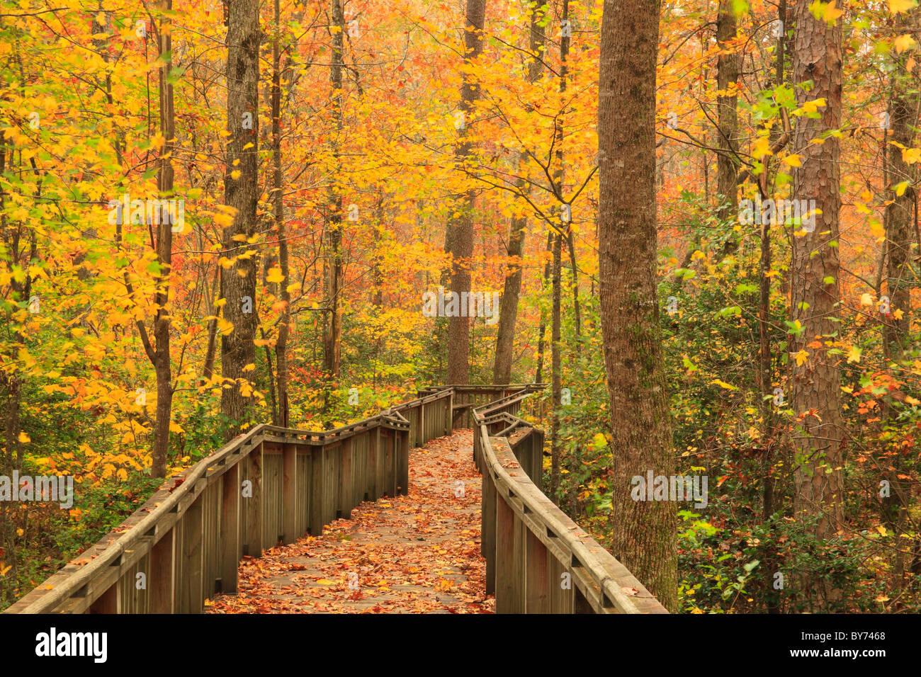 Talmadge Butler Boardwalk Trail, Azalea Cascade Trail, DeSoto State Park, Fort Payne, Alabama, USA - Stock Image