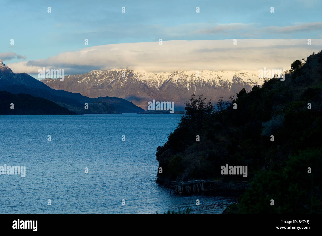 Cattle on farm by Lake General Carrera, Andes Mountains, Aysen, Patagonia, Chile - Stock Image