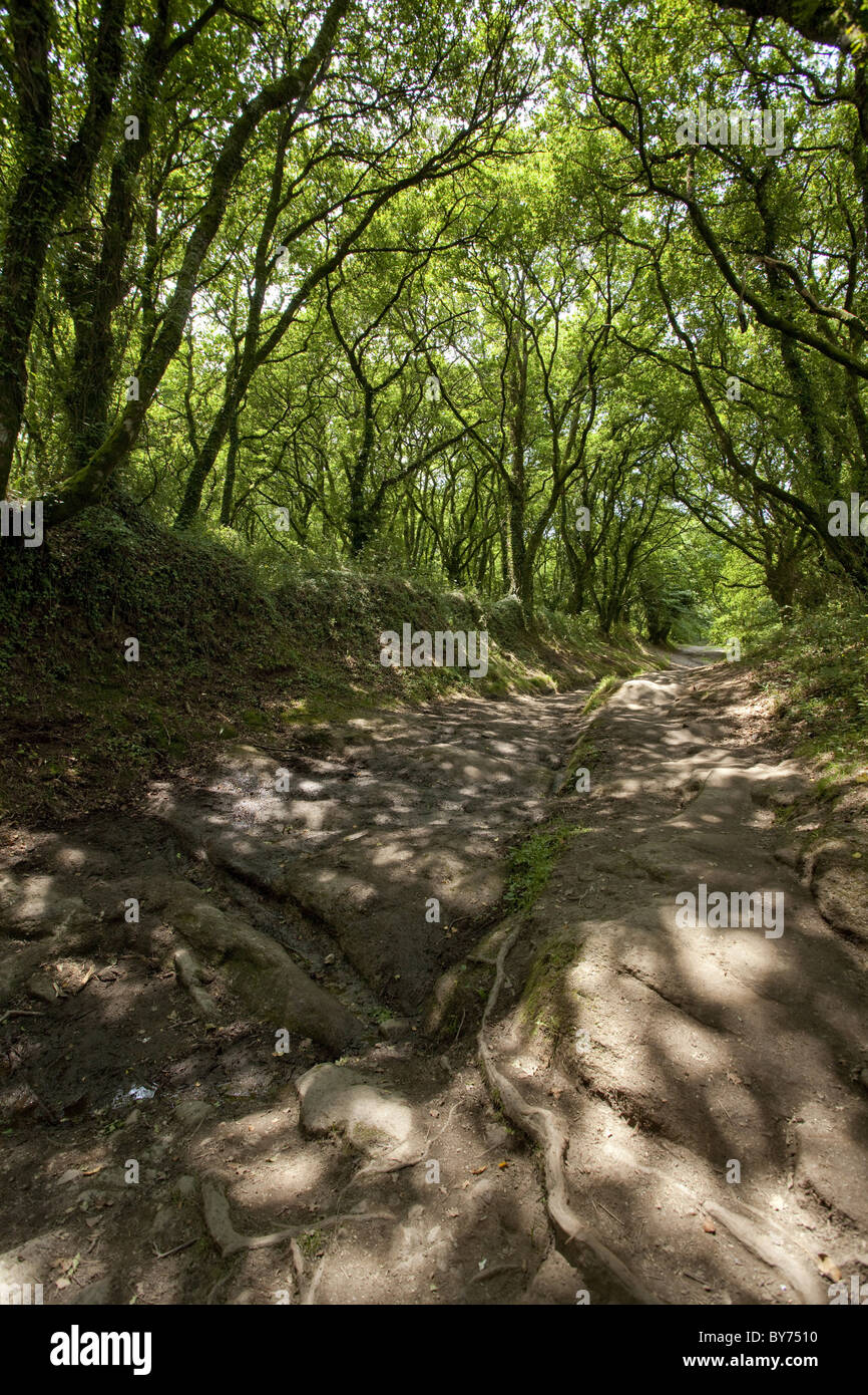 Sunken lane near Palas de Rei, Camino Frances, Way of St. James, Camino de Santiago, pilgrims way, UNESCO World - Stock Image