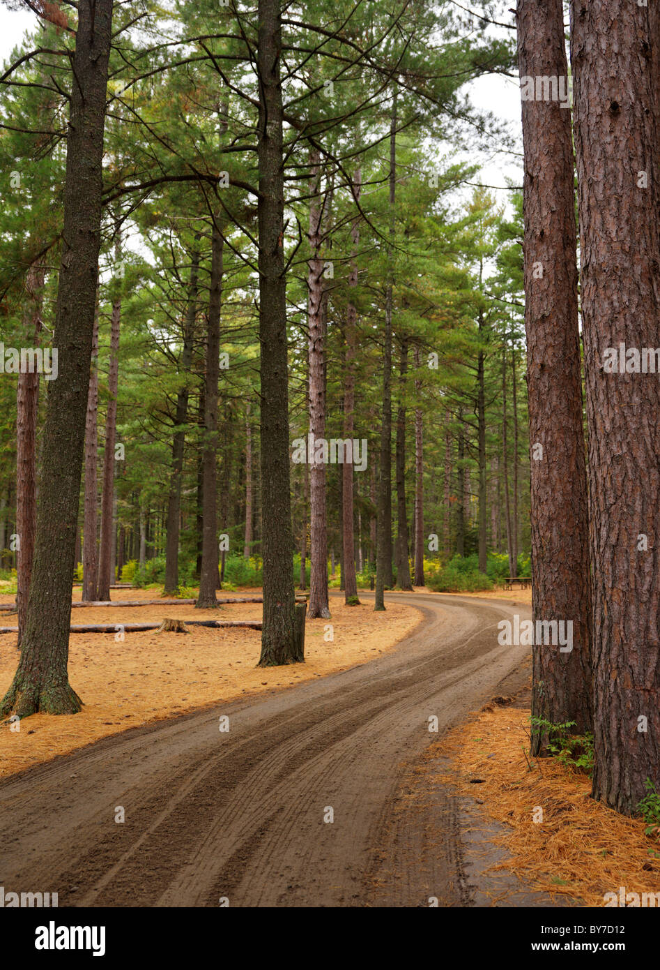 Winding unpaved road through beautiful fall nature scenery. Campground at Algonquin Provincial Park, Ontario, Canada. - Stock Image