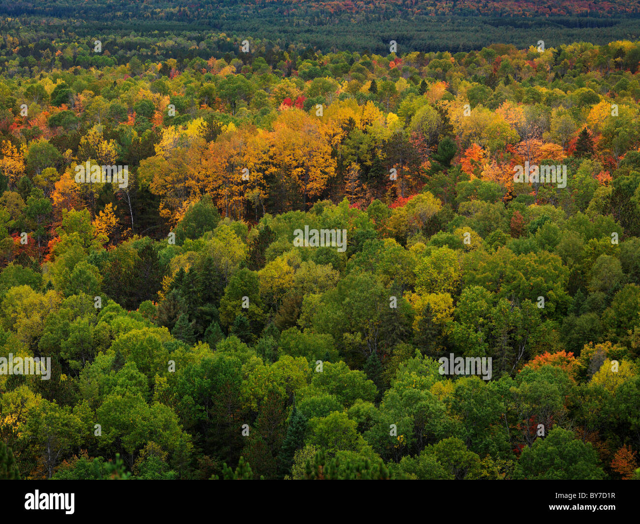 Aerial view of colorful autumn trees. Fall nature scenery. Algonquin ...