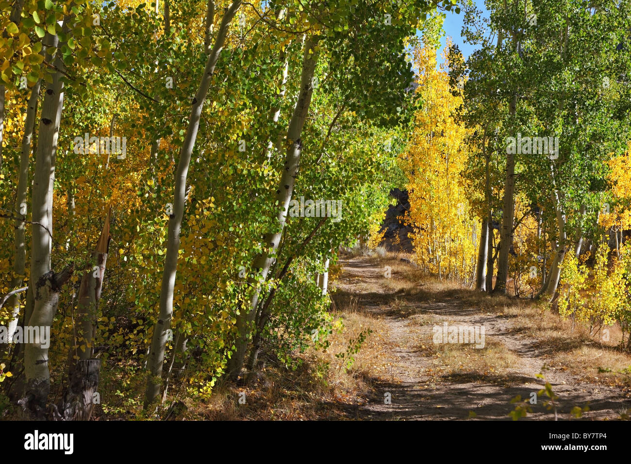 Beautiful fall colors in the American mountains. A dirt trail in the mountains on a fine day - Stock Image