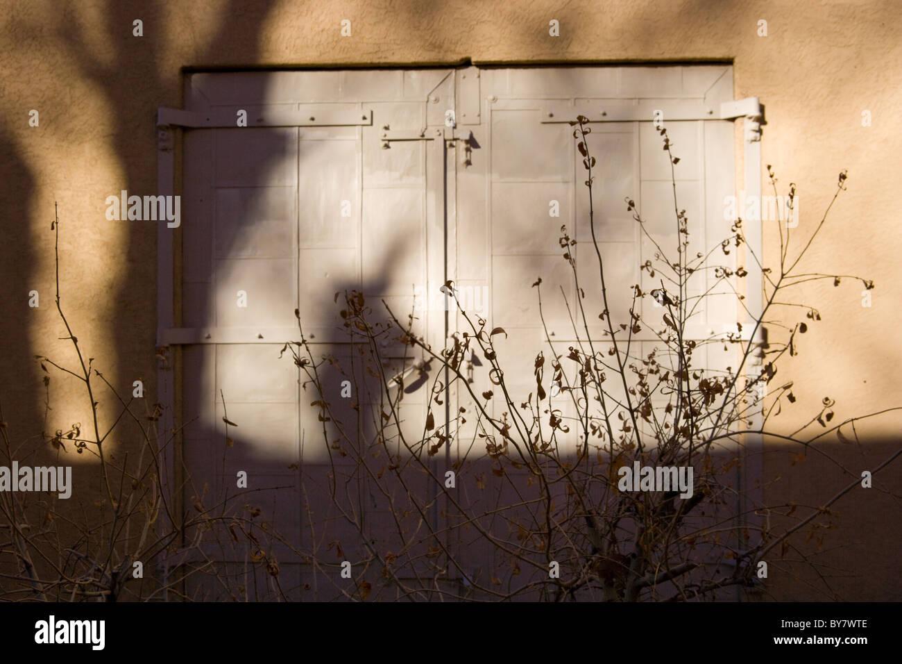 Shadow of tree on adobe wall, Santa Fe New Mexico, USA - Stock Image