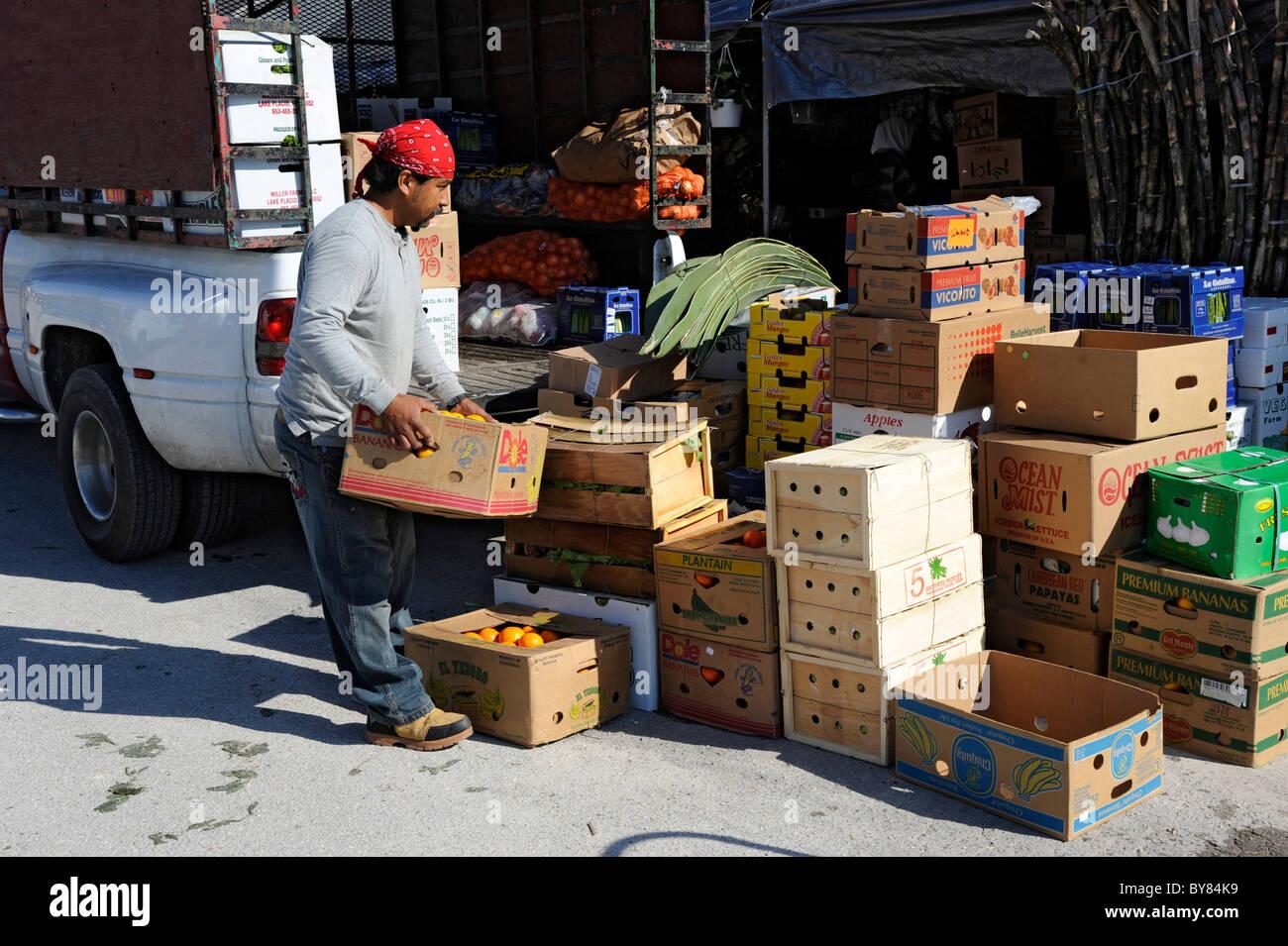 fruit citrus florida Bradenton bargain browse buy clearance Diet Eat Food Groceries Meal Nourish Nourishment Nutrition - Stock Image
