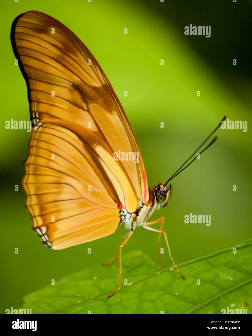 Butterfly Macro - Stock Image