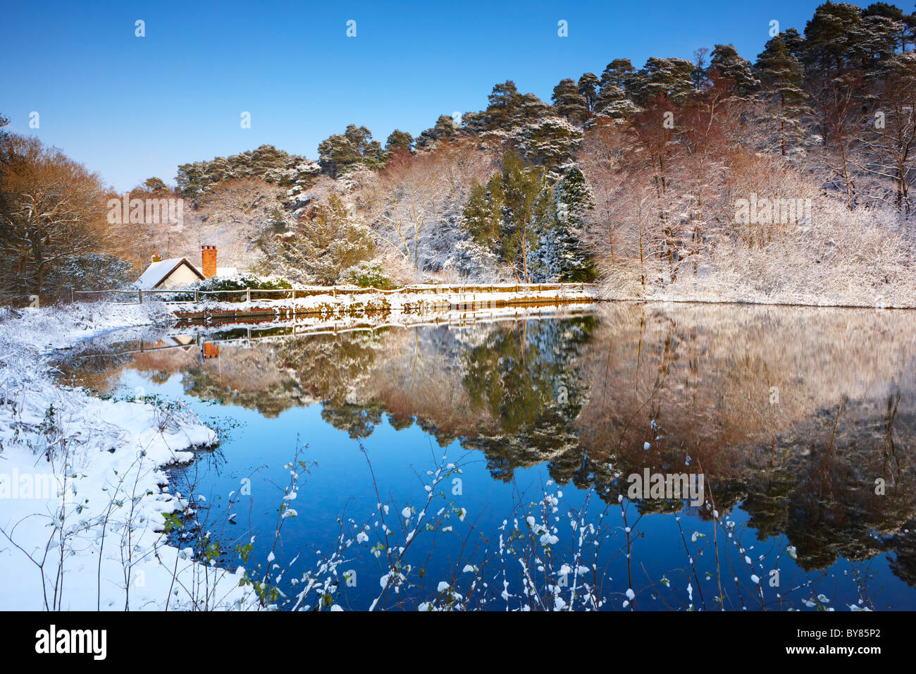 A covering of snow reflected in the Mill pond at Friday Street, Surrey - Stock Image