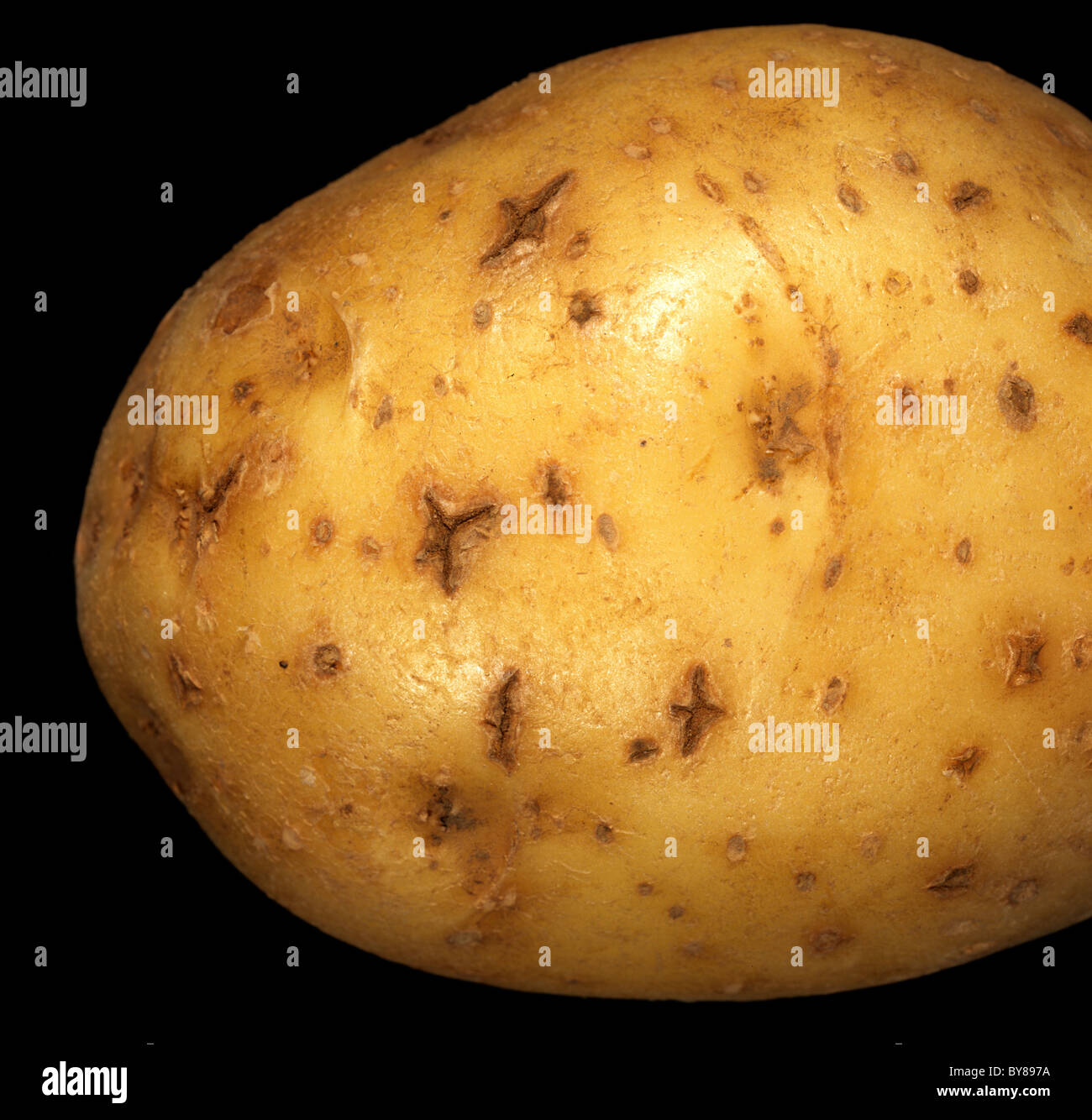 Star crack lesions on skin surface of a potato tuber - Stock Image