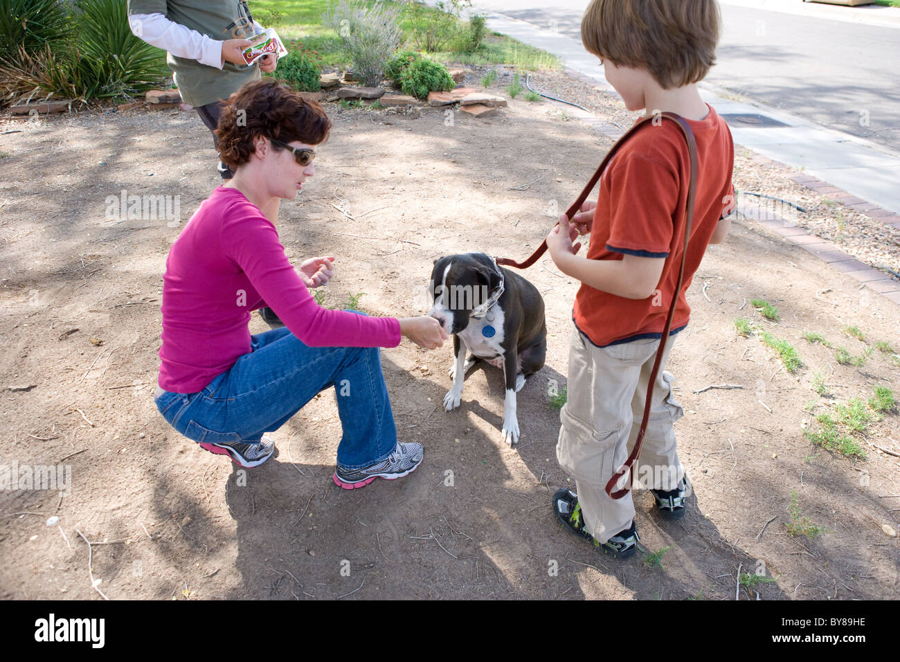 Female dog trainer working with a child and his boxer-pitbull cross, with leash and treat, teaching basic commands - Stock Image