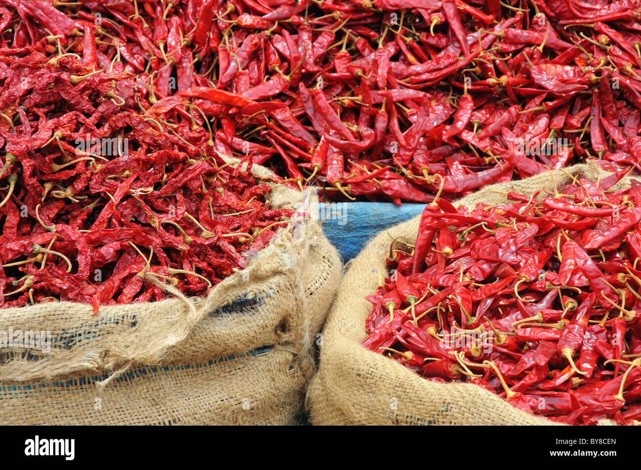 Sacks of red chillies Stock Photo
