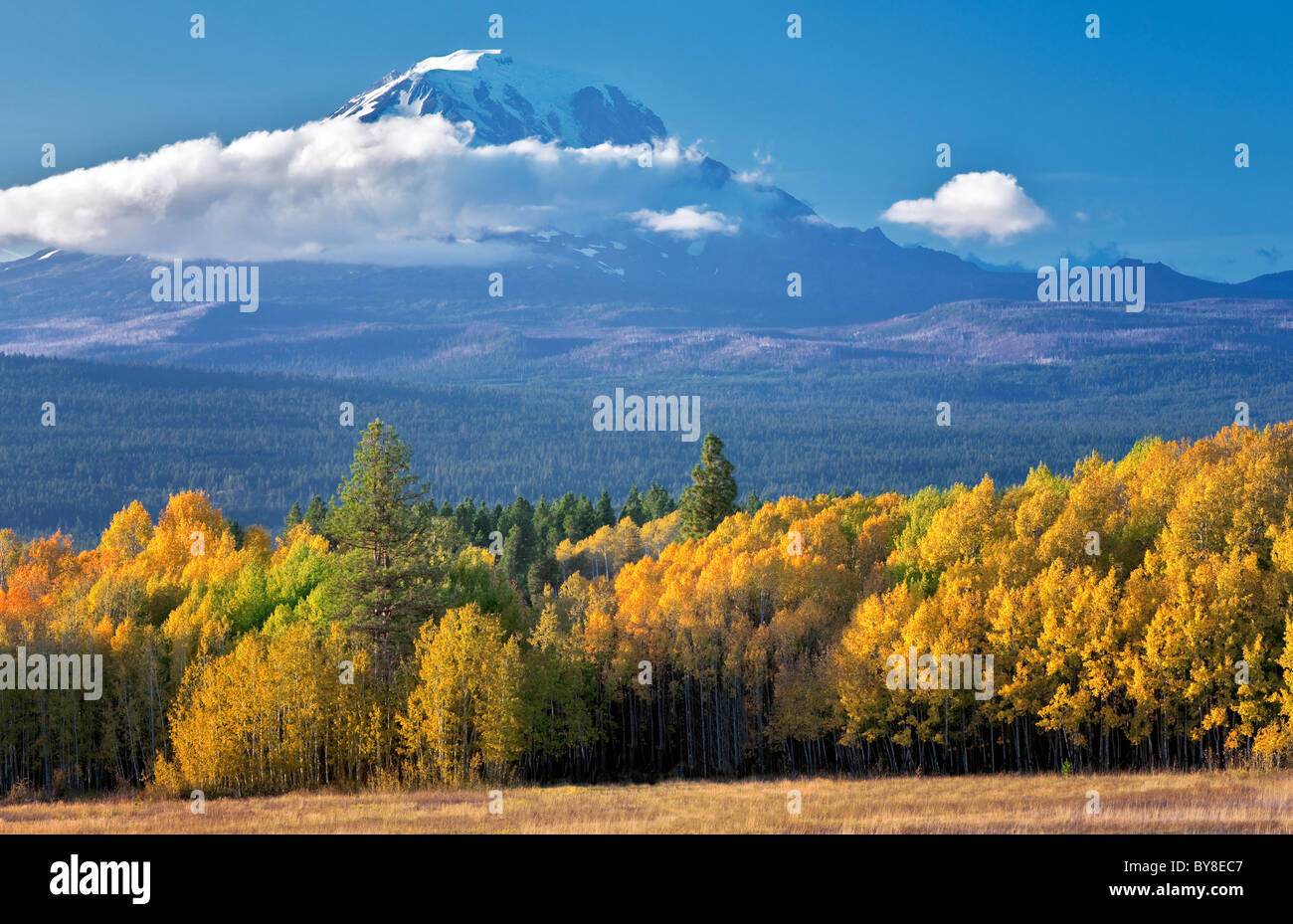 Mt. Adams with fall colored aspens as seen from Conboy Lake National Wildlife Refuge, Washington - Stock Image