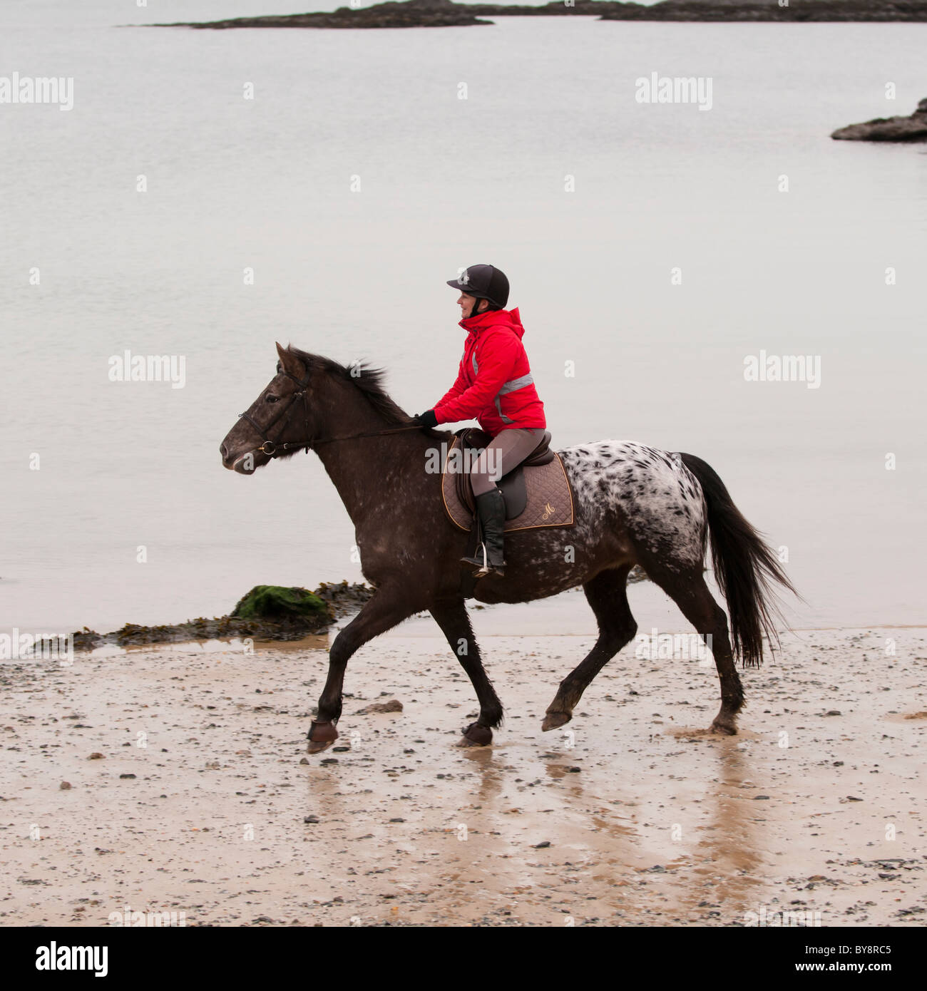 A woman riding a horse on the beach at Trearddur Bay, Anglesey, North Wales UK - Stock Image