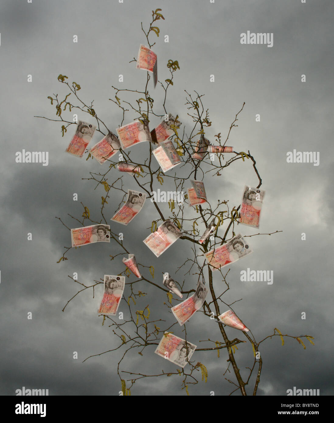 It is an old saying in the UK that money does not grow on trees - here it appears that it does. - Stock Image