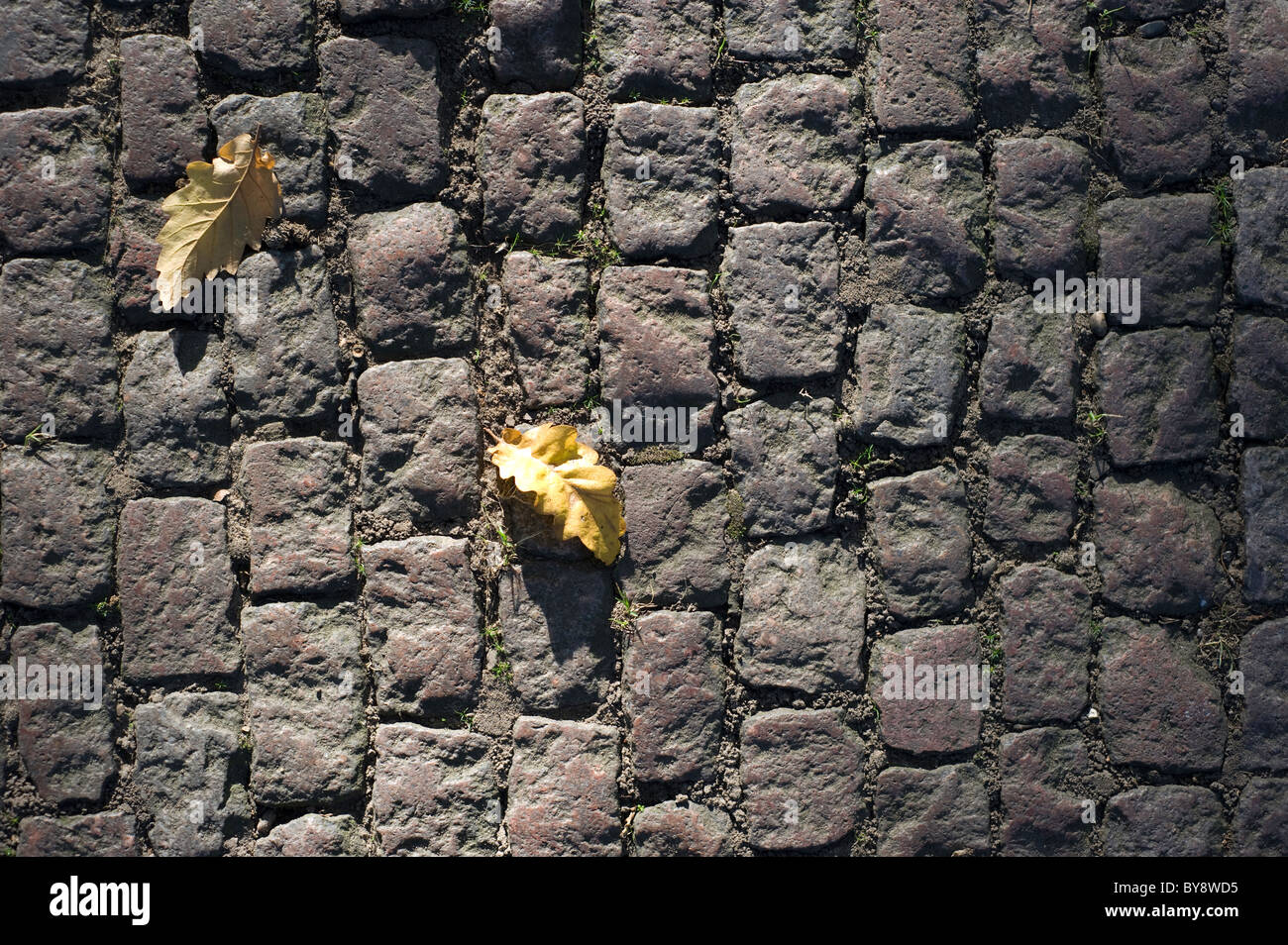 two dead leaves on a Victorian or Edwardian cobbled road on a sunny autumn afternoon - Stock Image