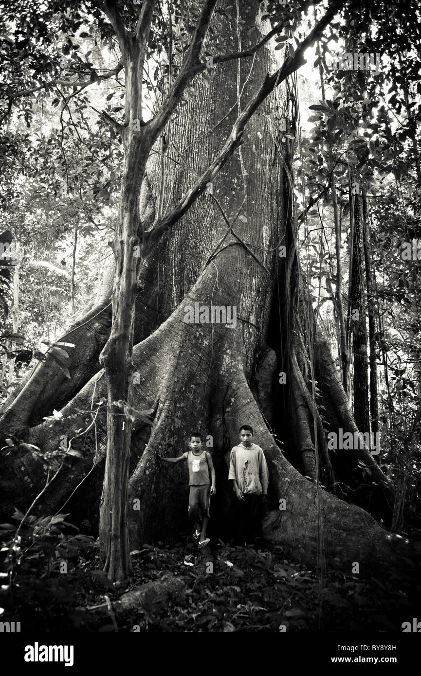 Two boys standing in front of a huge Kapok Tree in the Amazon Rainforest - Stock Image