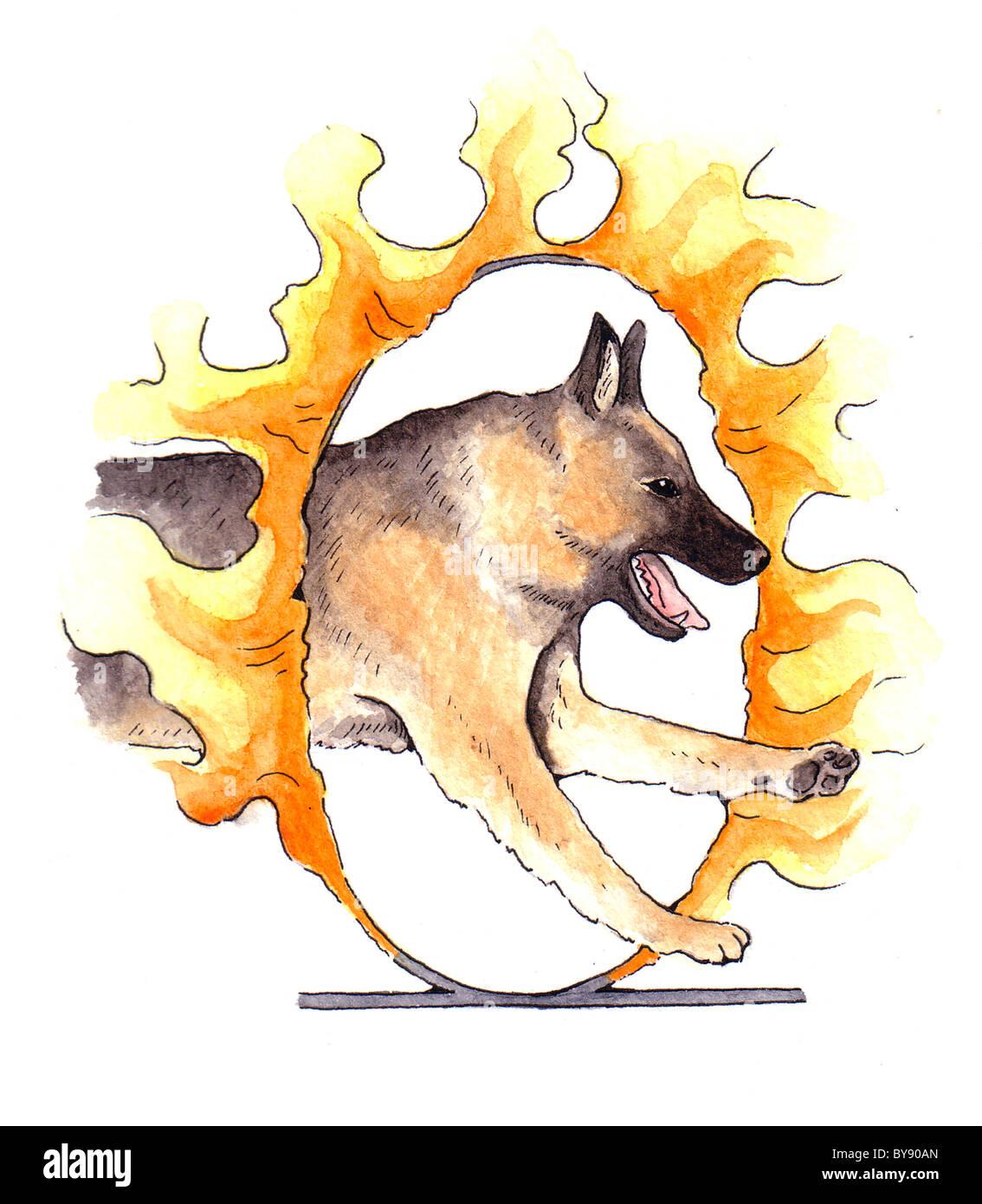 German shepherd jumping through ring of fire - Stock Image