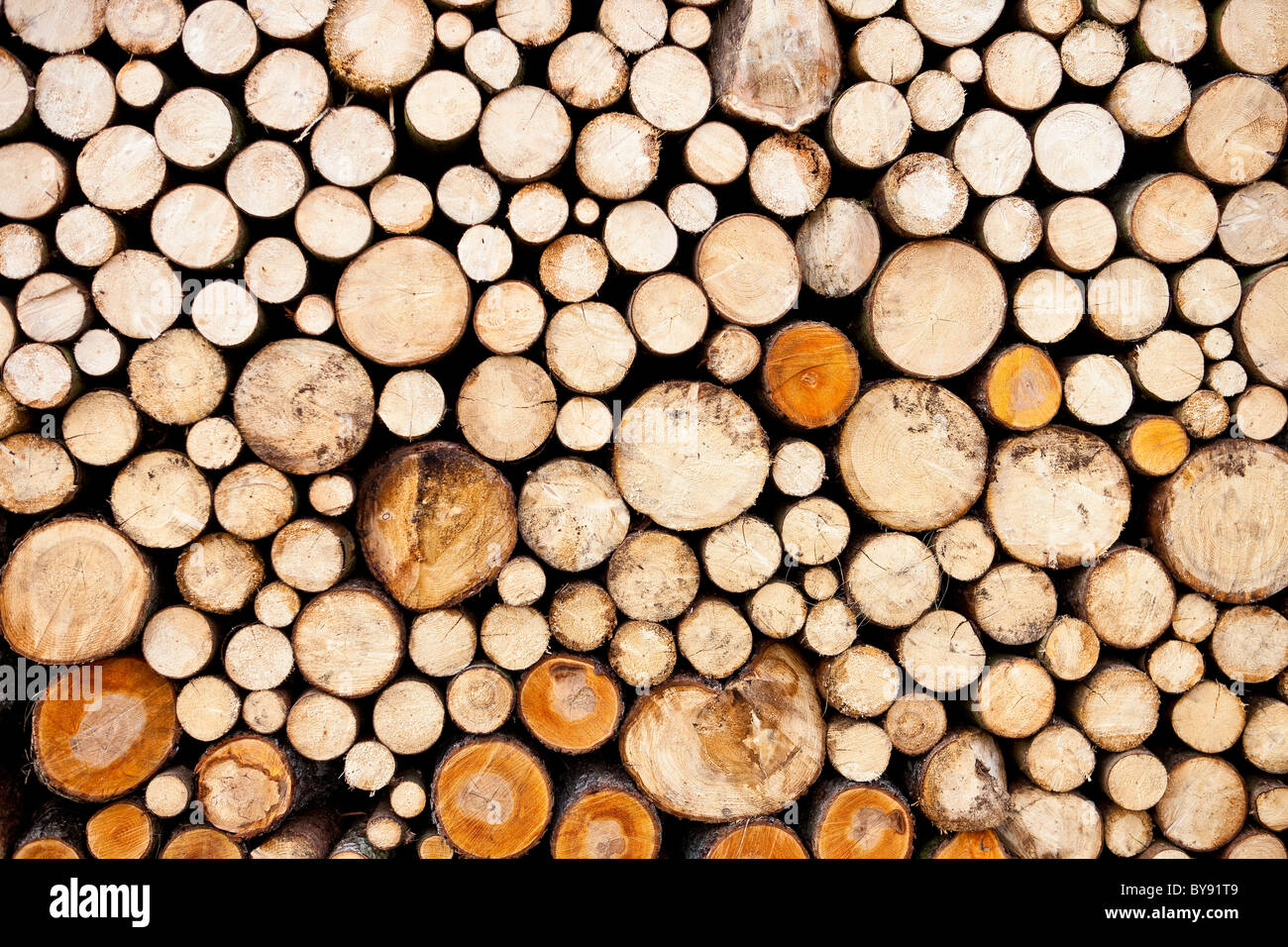 A pile of neatly cut and stacked logs - Stock Image