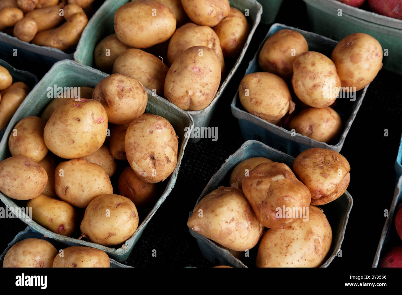 Fresh market potatoes - Stock Image