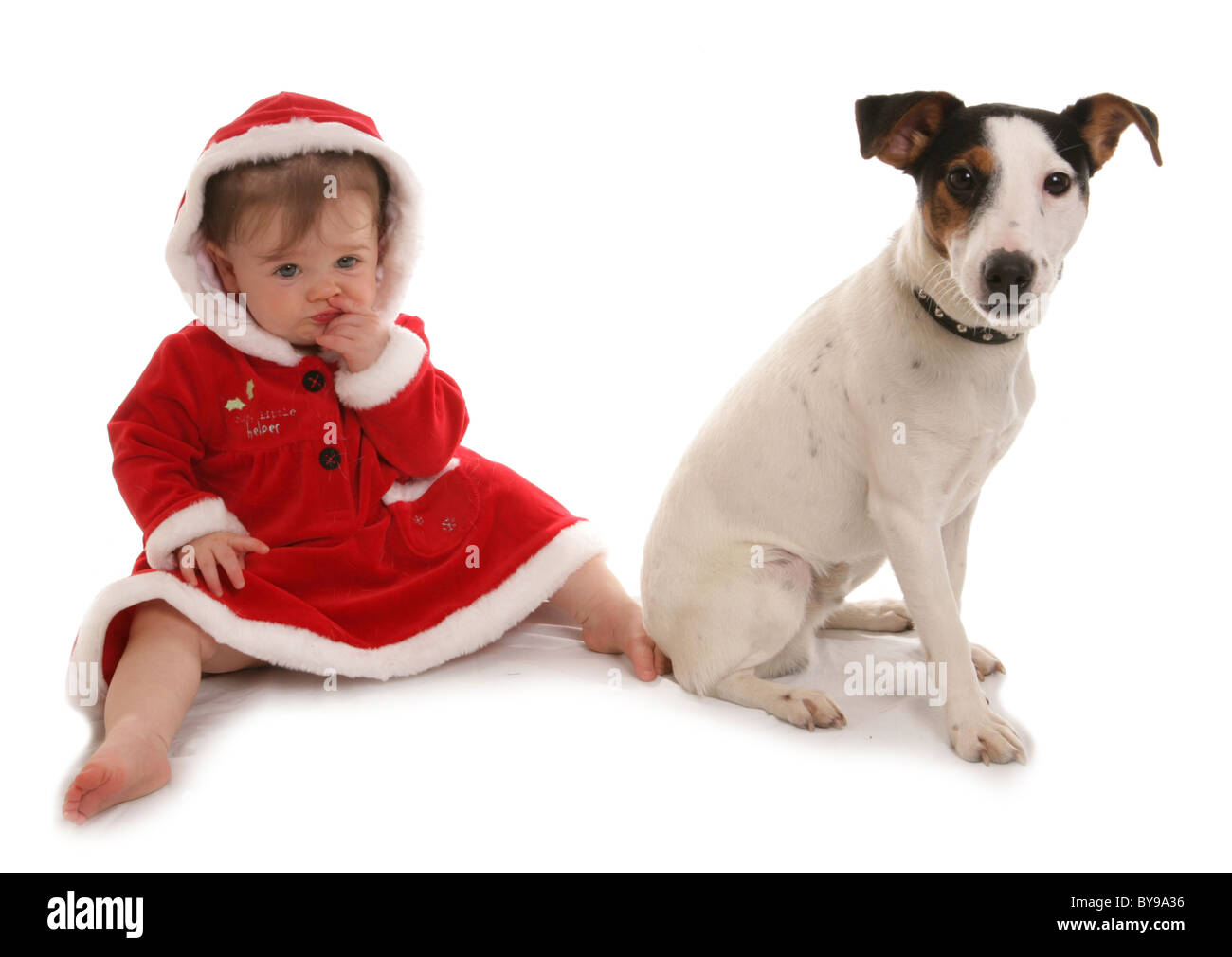 Toddler with pet dog Year old girl with Jack russell dog Studio - Stock Image
