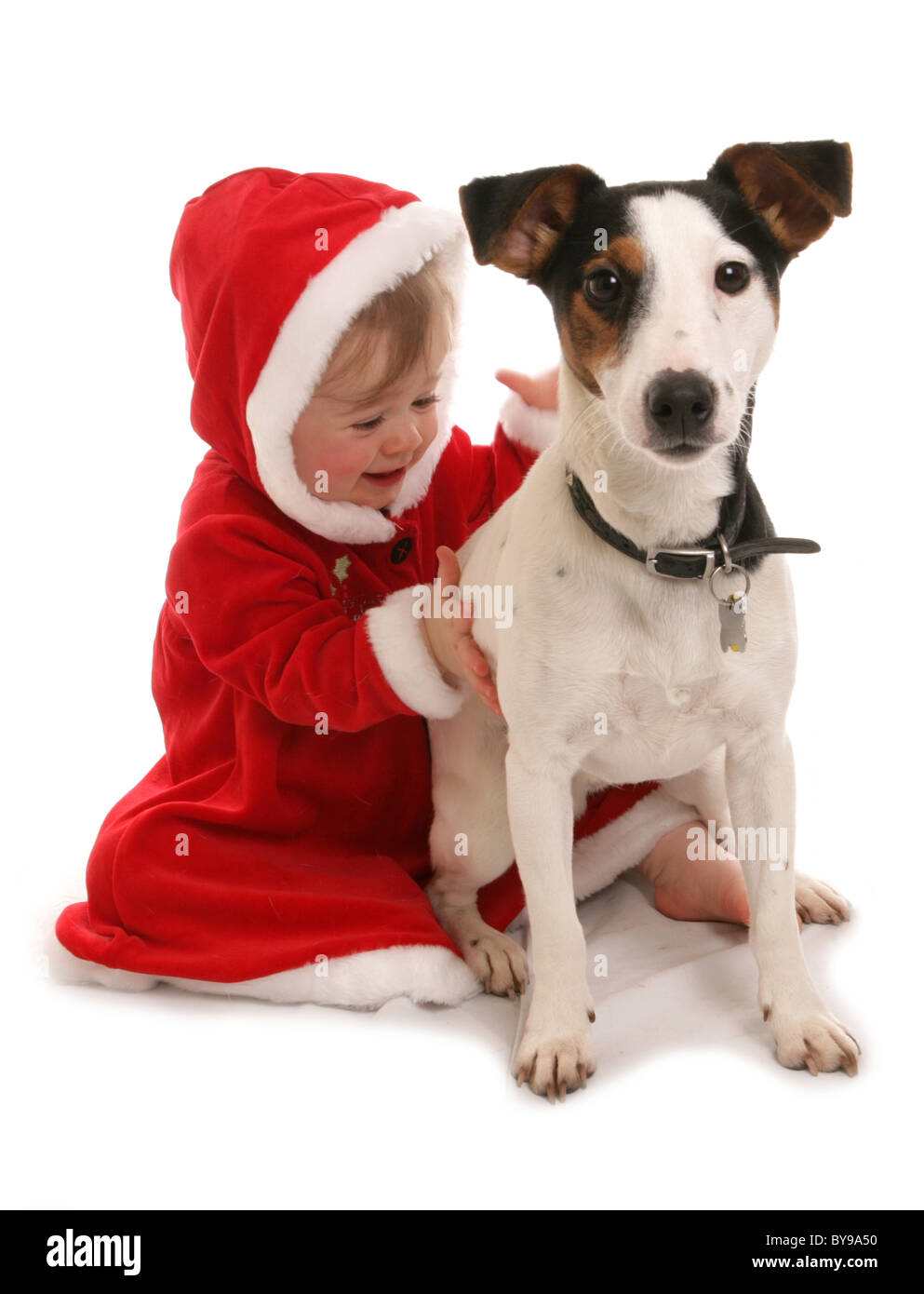 Toddler with pet dog Year old girl with Jack russell dog Studio Stock Photo