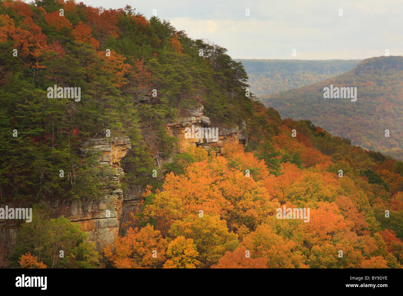 View from Laurel Gulf Overlook, Stone Door Trail, Savage Gulf State Natural Area, Beersheba Springs, Tennessee, Stock Photo