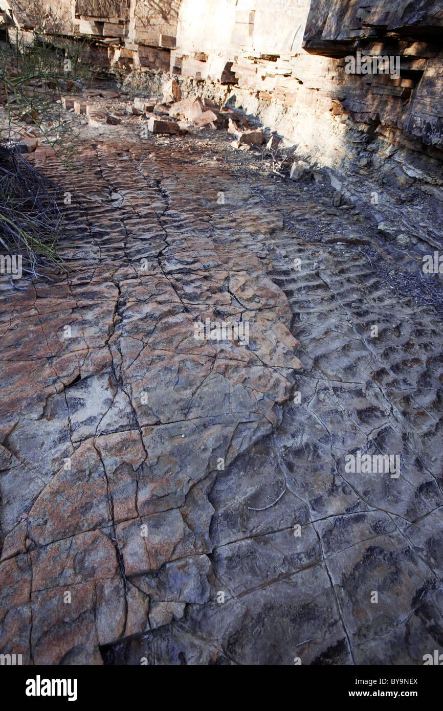Ancient seabed, Tucson Mountains, Tucson, Arizona - Stock Image