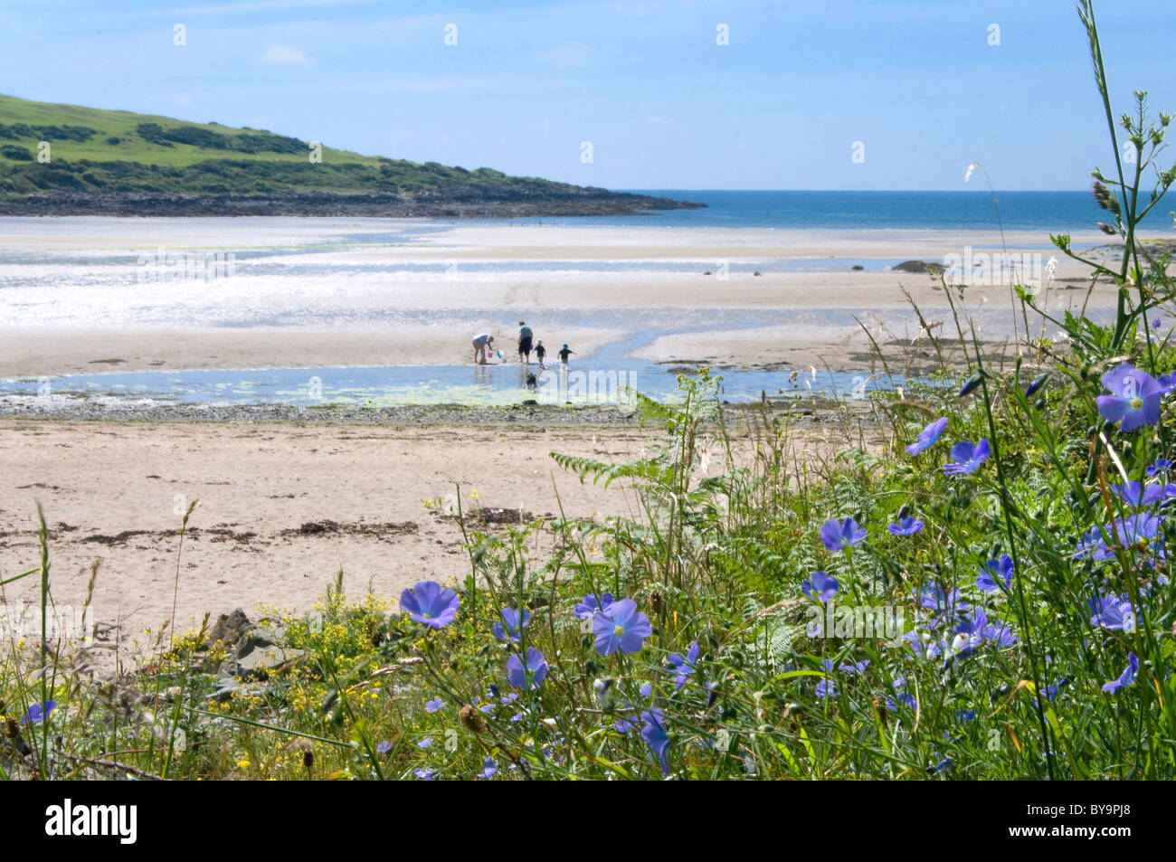 Family on beach at Brighouse Bay with rare blue flax in foreground - Stock Image