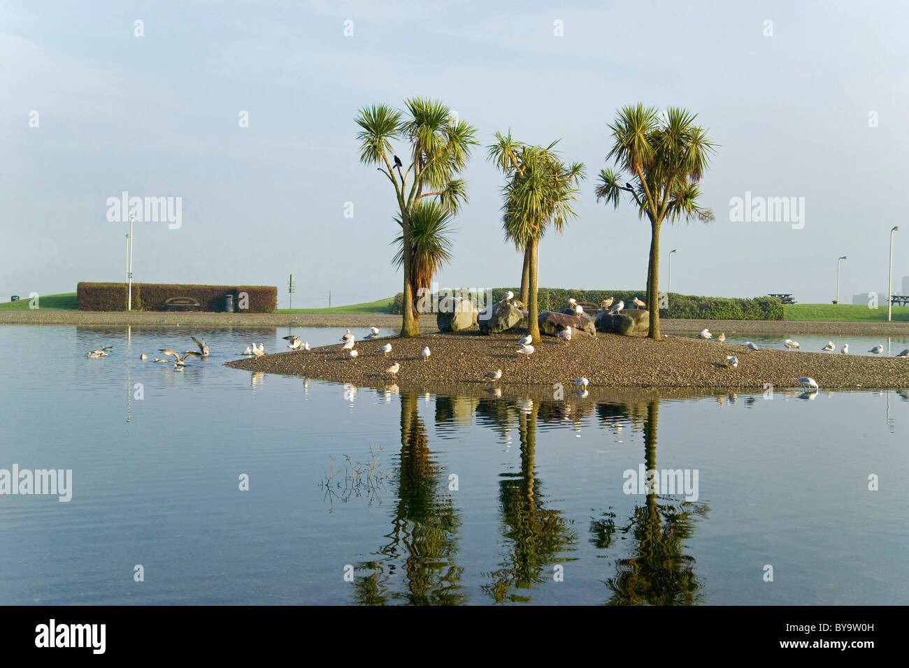Stranraer Lagoon with Palm trees, Wigtownshire - Stock Image