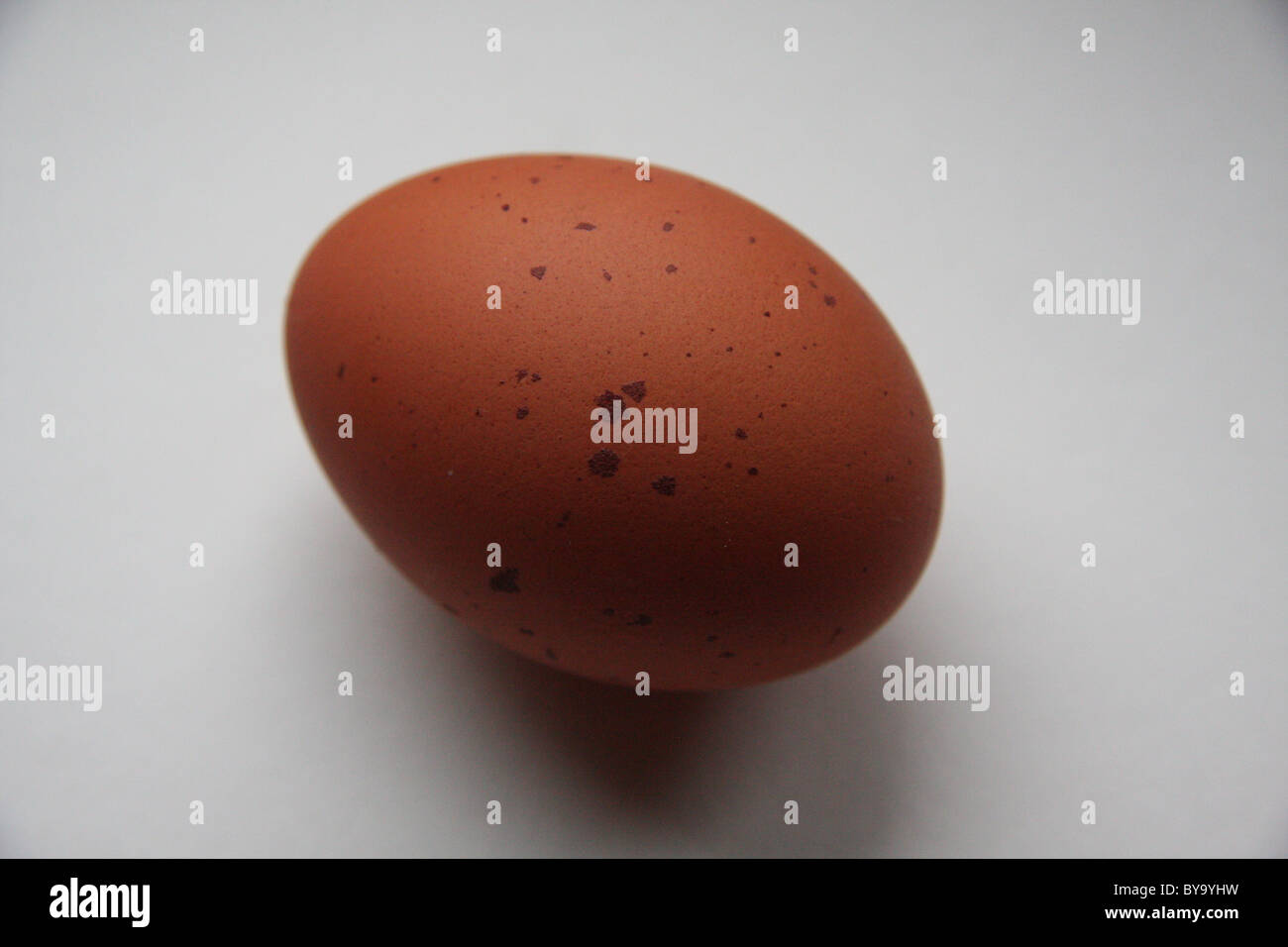 one speckled chicken egg Stock Photo