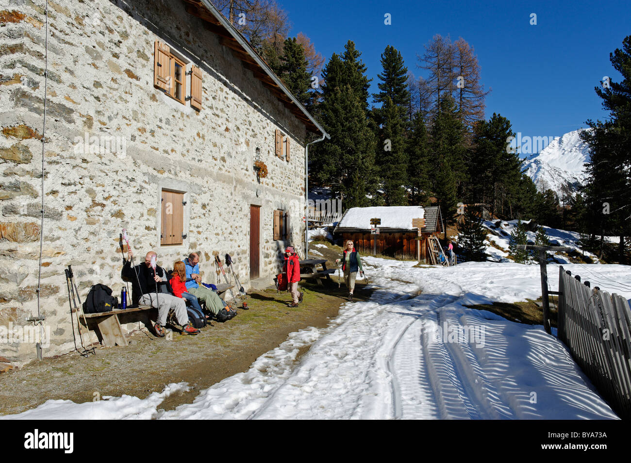 Lyvialm alp, Stelvio National Park, Val Martello, Vinschgau, Southern Tyrol, Italy, Europe Stock Photo