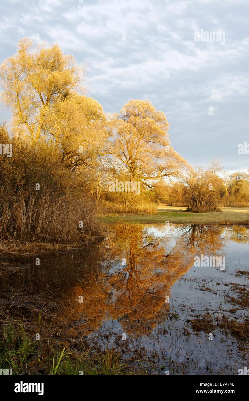 Bog near Grabenstaett, Hirschauer Bucht, Chiemsee, Chiemgau, Upper Bavaria, Germany, Europe - Stock Image