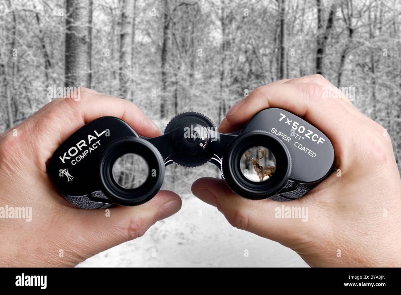 Looking through binoculars toward a deer in the forest - Stock Image