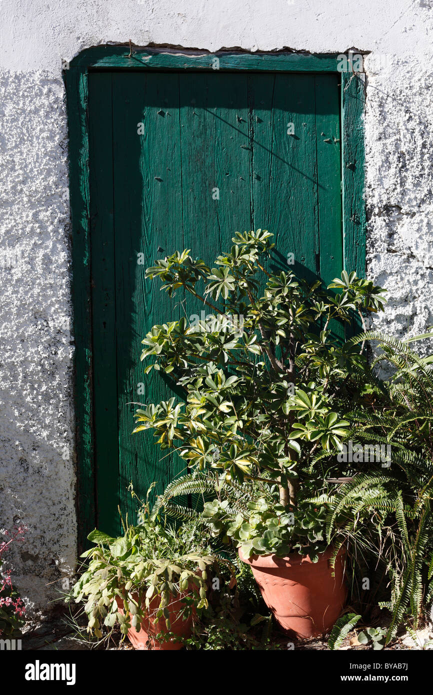 Potted plants outside the door, village of Macayo near Vallehermoso, La Gomera, Canary Islands, Spain, Europe - Stock Image