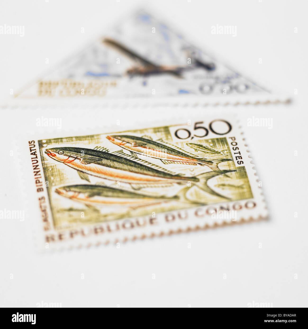 Republic Of Congo Postage Stamp, Elagatis bipinnulata - Stock Image