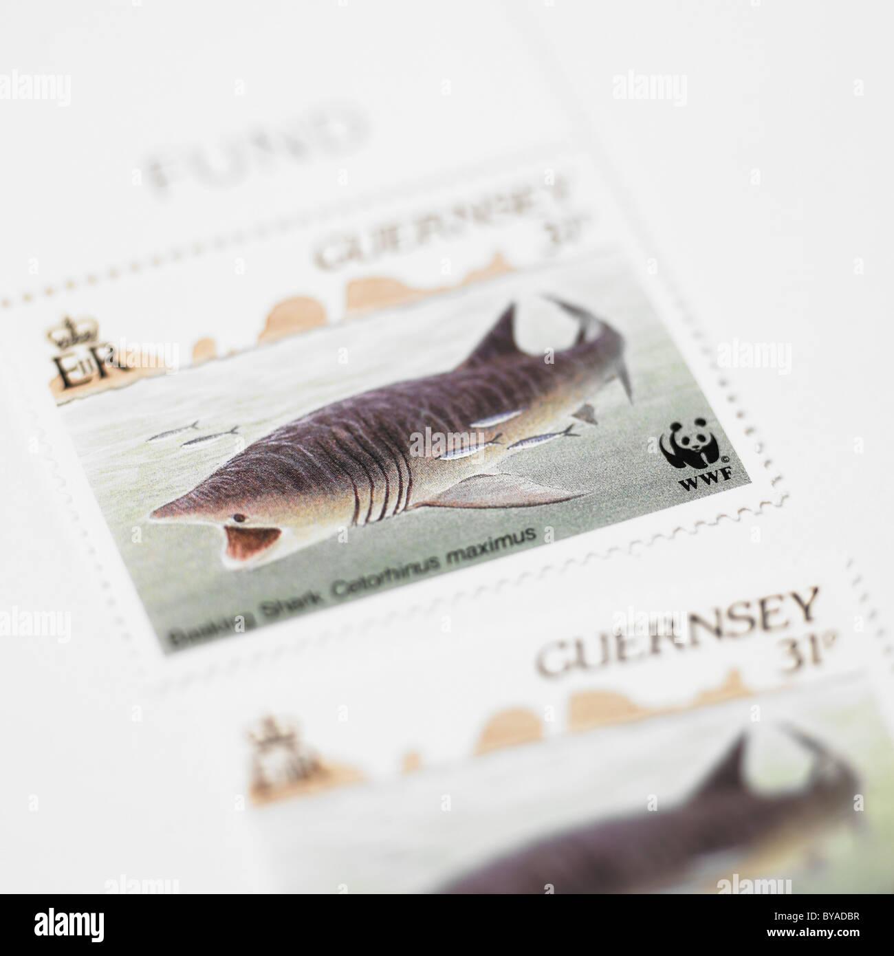 Guernsey Postage Stamp, Basking Shark - Stock Image