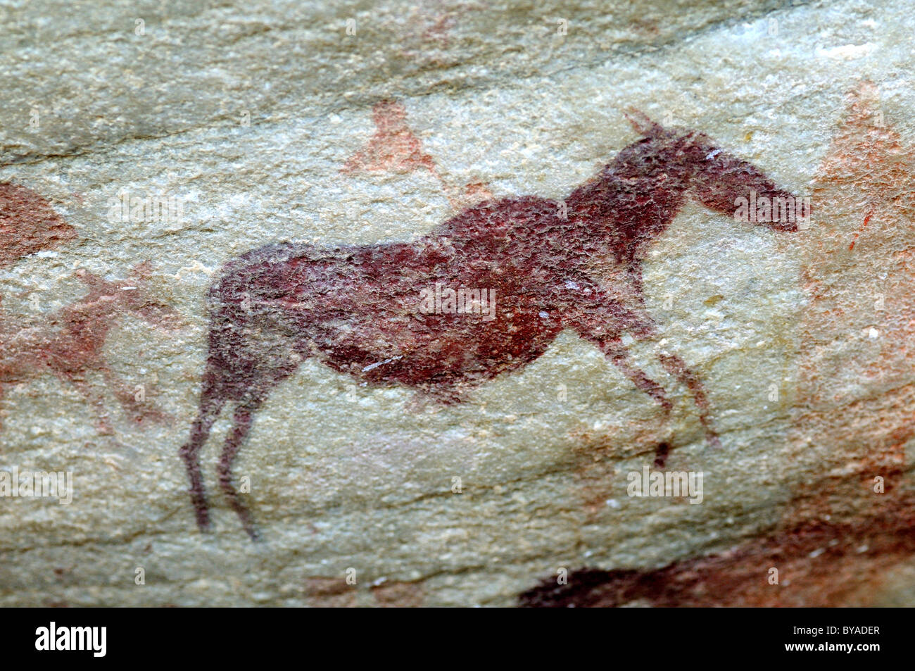 Prehistoric representation of an eland antelope, zebra or quagga, rock paintings of the Bushmen on the Sevilla Rock - Stock Image
