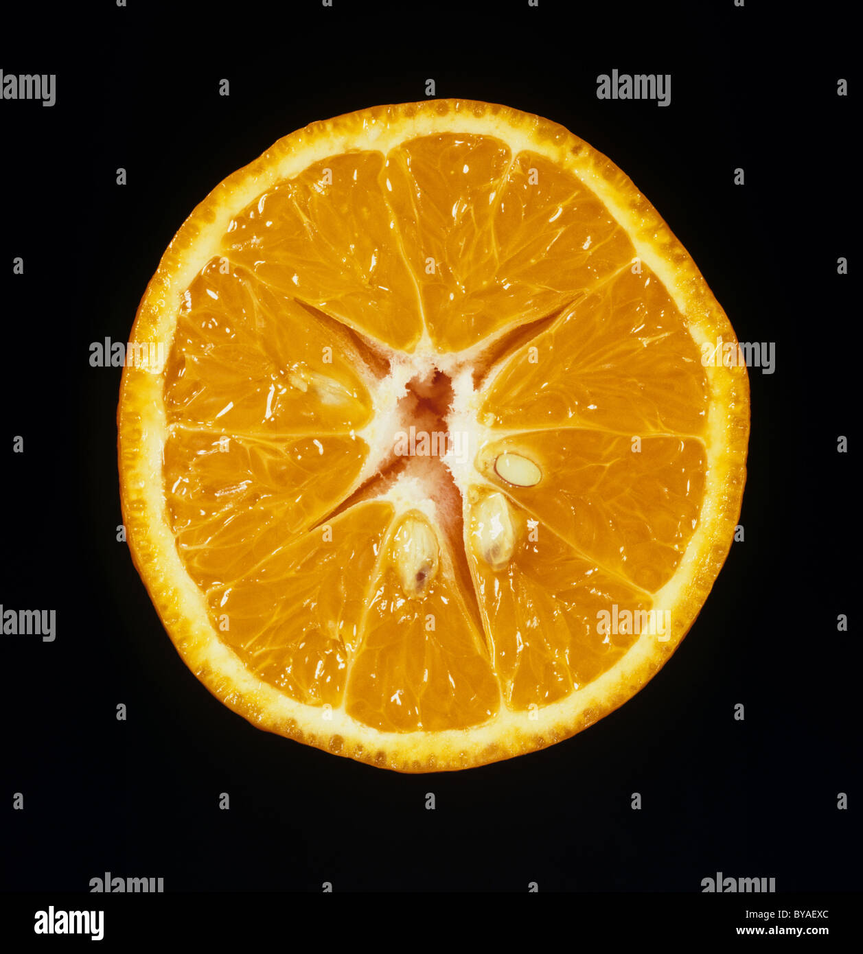 Cut section of clementine fruit variety Page - Stock Image