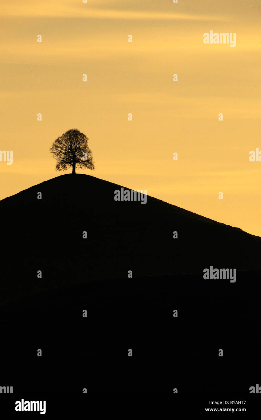 Tree on a moraine hill, Hirzel, Switzerland, Europe - Stock Image