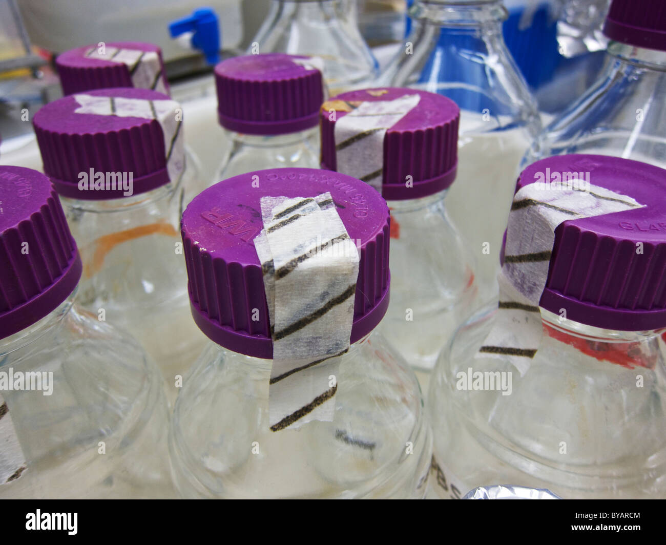 Laboratory glassware after autoclaving. Autoclave indicator tape on covers and caps. - Stock Image