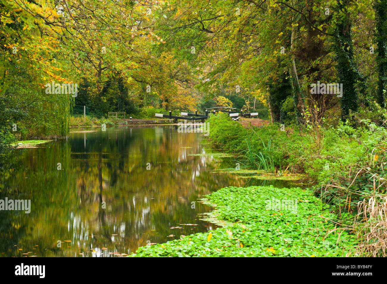 Basingstoke Canal in autumn, near Woking, Surrey, UK - Stock Image