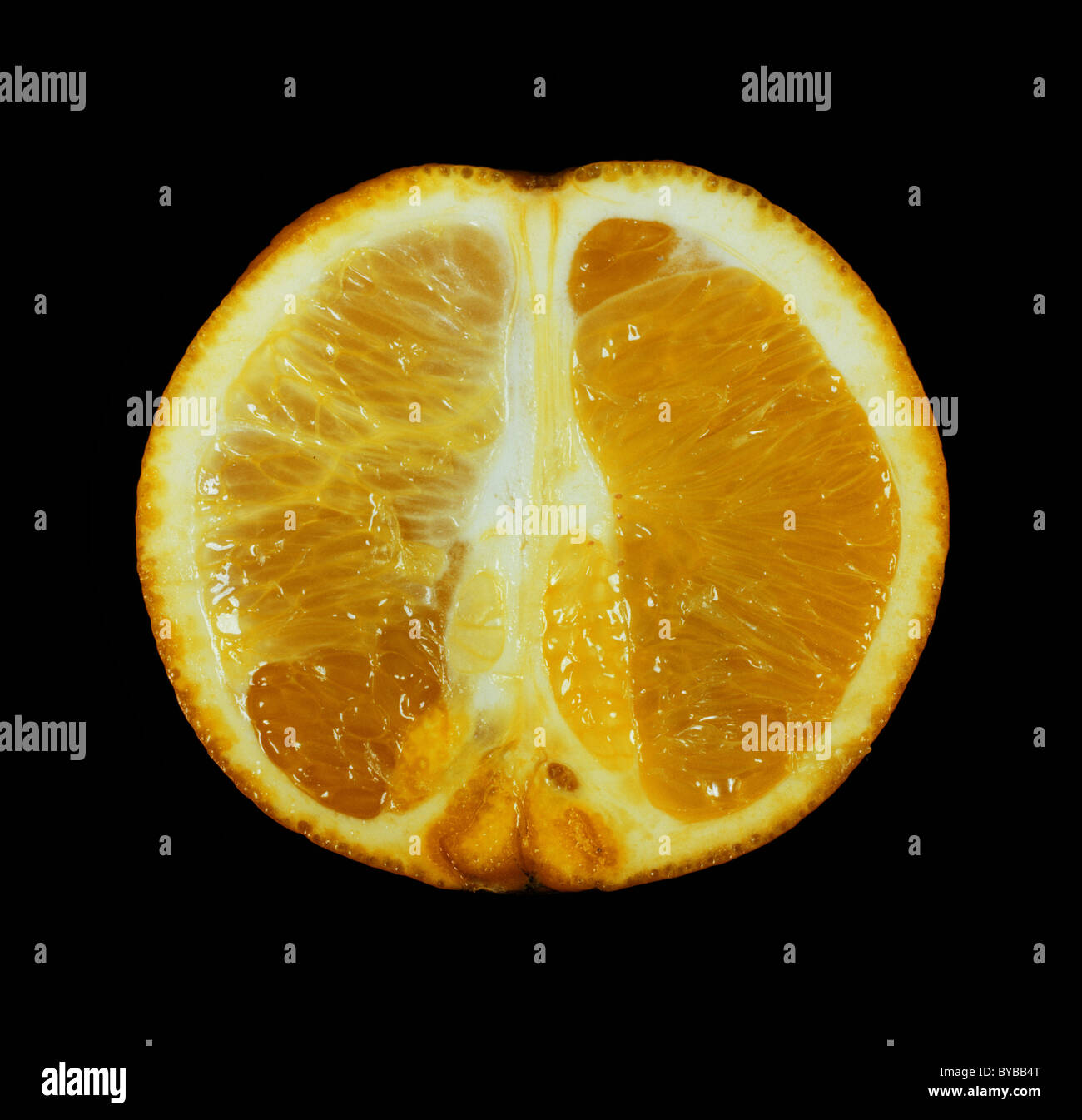 Cut section (longitudinal) of an orange fruit variety Washington Navel - Stock Image
