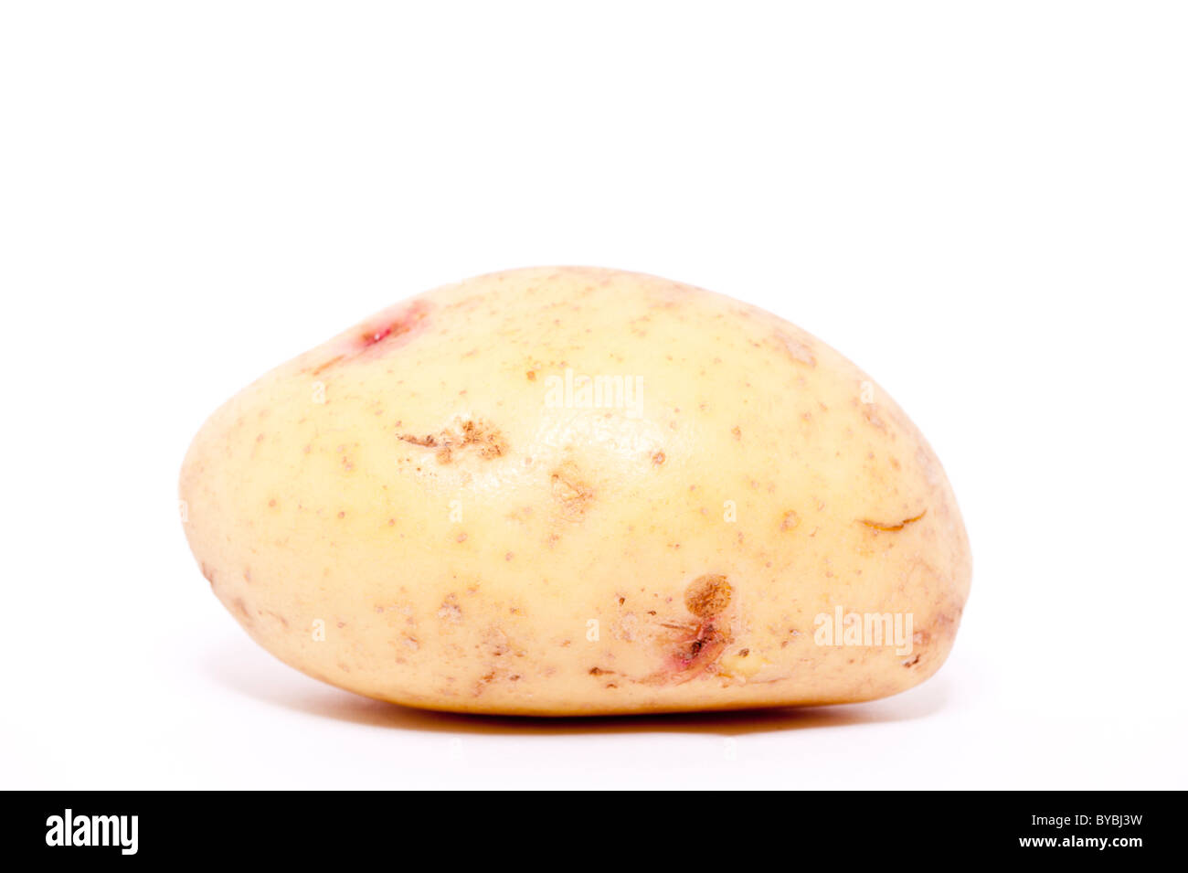 A white potato on a white background - Stock Image
