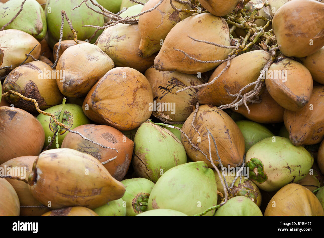 Coconuts Market Stock Photos & Coconuts Market Stock Images